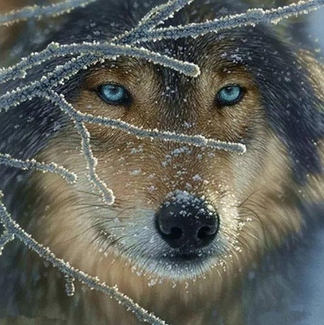 """Алмазная вышивка 40х40см - набор """"Волк с голубыми глазами"""""""