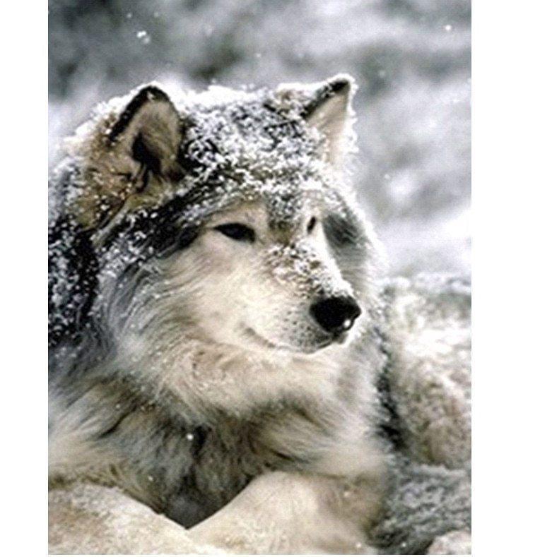 """Алмазная вышивка 40х30см - набор """"Волчица"""""""