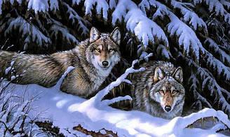 """Алмазная вышивка 50х30см - набор """"Волки на снегу"""""""