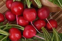 Семена весовые редиса Кармен