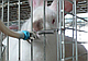 Поилка сосковая для кроликов и др. грызунов, фото 5