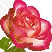 Серветки 24х24 3шар. 20шт Марго троянда  Укр.