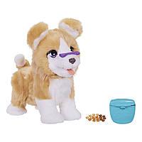 FurReal Friends Интерактивная игрушка щенок Лекси Lexie Pet the Trick-Lovin' Pup, фото 1