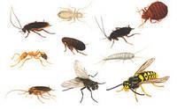 Уничтожители (отпугиватели) насекомых и грызунов