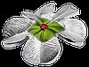 Конюшина ~ 3D ~ Срібна монета у презентаційному футлярі