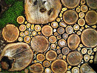 Садовая дорожка  из спилов деревянная в украинском стиле с доставкой по всей Украине