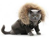 Пошив одежды  для кошек и собак.