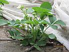 Агроволокно на метраж 23 белый 6,35 м Усиленный край, фото 5