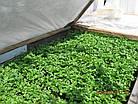 Агроволокно на метраж 23 белый 6,35 м Усиленный край, фото 7