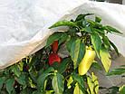 Агроволокно на метраж 23 белый 6,35 м Усиленный край, фото 6