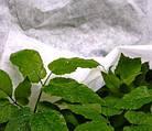 Агроволокно на метраж 30 белый 2,15 м, фото 3