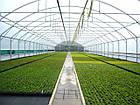 Агроволокно на метраж 30 белый 2,15 м, фото 6
