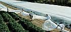 Агроволокно на метраж 40 белый 6,35 м, фото 7