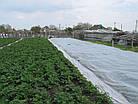 Агроволокно на метраж 50 белый 1,6 м, фото 9