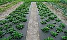 Агроволокно на метраж 50 черное 1.6м, фото 5