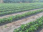 Агроволокно на метраж 50 черное 3,2м, фото 9