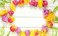 Фотофон виниловый, тюльпаны 310619
