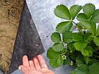 Агроволокно 50 черно-белый 1,07*50, фото 4