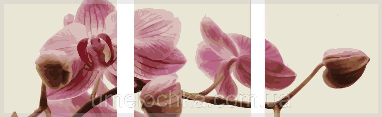 Картина раскраска триптих цветы Babylon Розовые орхидеи