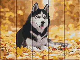 Картина по номерам Хаскі, 30x40 см., Art Story