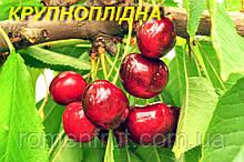 """Саженцы черешни """"Крупноплодная"""""""