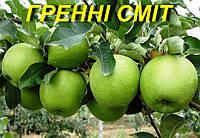 """Саженцы яблони """"Гренни Смит"""""""