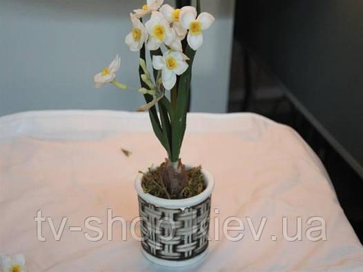 Нарцисс в керамическом горшке (2 цвета)