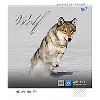 А5/12 линия YES фольга серебро+УФ-выб Wild force, тетрадь (упаковка 10 штук)