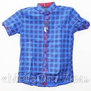 Рубашки мужские  коттон (M-3XL норма) Турция, от 5 шт.