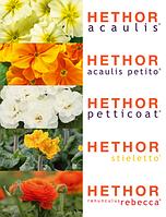 Семена примулы и ранункулюса от фирмы Hethor (Германия)