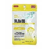 Молочнокислі бактерії / Lactic acid Японія! Daiso, фото 3