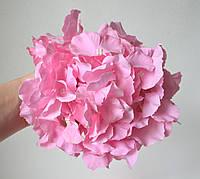 Гортензії головка велика рожева