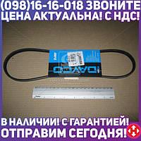 ⭐⭐⭐⭐⭐ Ремень поликлиновый (производство  DAYCO)  3PK812