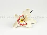 Цветы из мастики - Орхидея белая ∅110 - 1 шт.