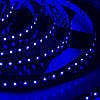LED Galaxy/strip 3528/600 SMD//blue/