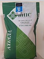 АТИЛЛА (ЭКСТРА) семена подсолнечника