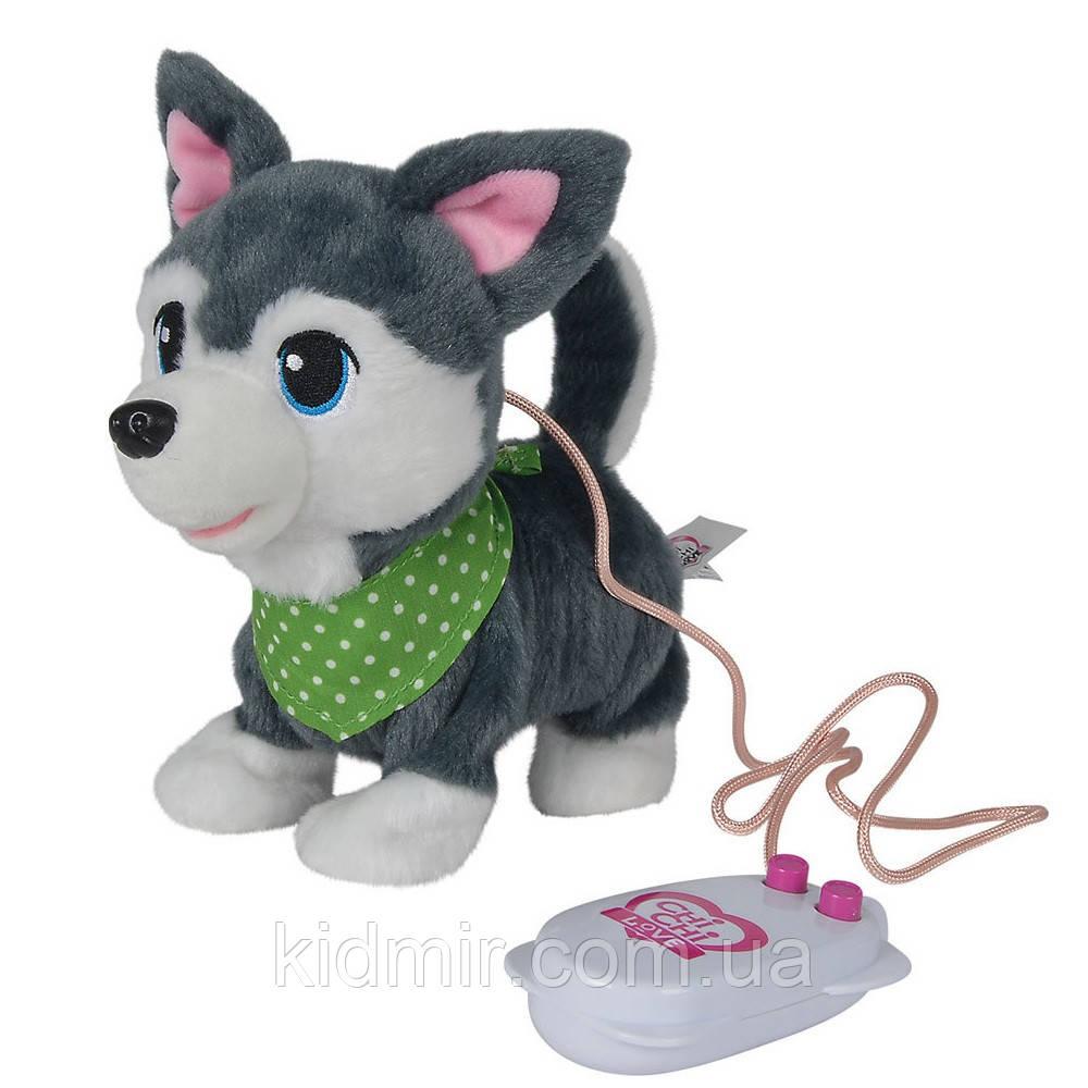 Чи Чи Лав Собачка Чихуахуа Друзья щенки на проводном управлении Серый Chi Chi Love Simba 5893243