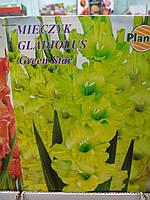 Гладиолусы луковицы новая коллекция Gladiolus Green Star 1 шт, фирма Planta