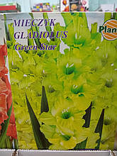 Гладіолуси цибулини нова колекція Gladiolus Green Star 1 шт, фірма Planta