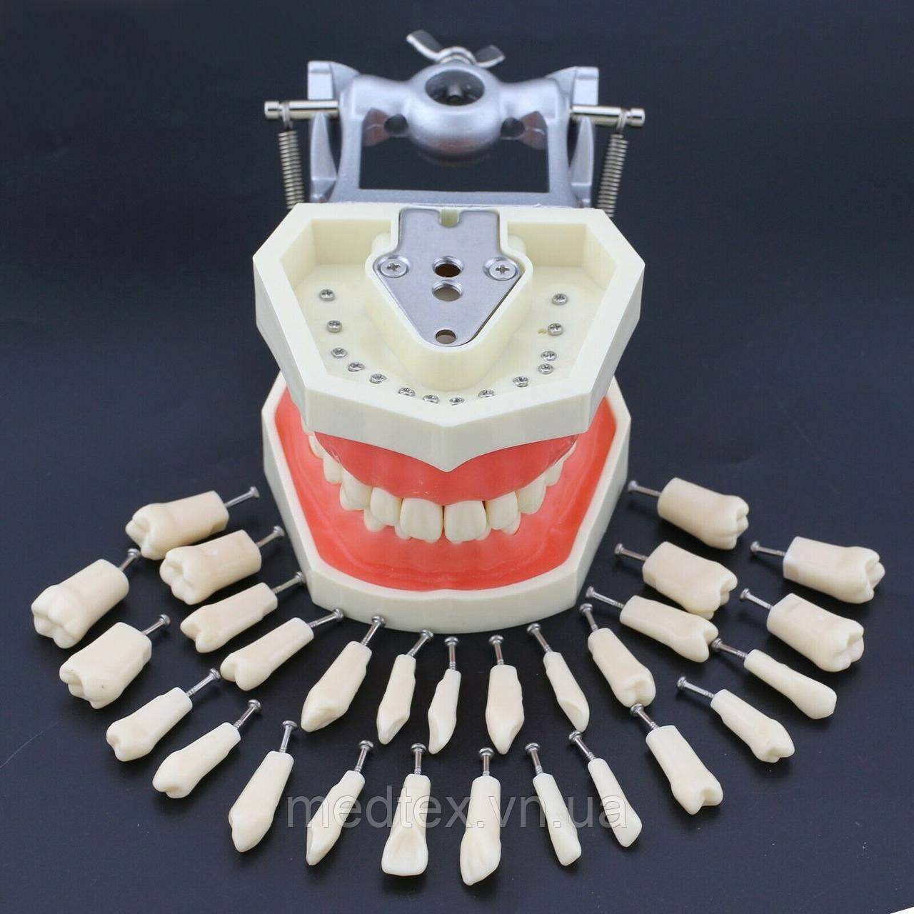 Набор сменных зубов для фантома, модели