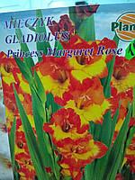 Гладиолус луковичные Gladiolus Princess Margaret Rose 1 шт, крупноцветковые фирмы Planta оригинал