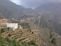 Йеменский кофе – эксклюзив с неповторимым вкусом