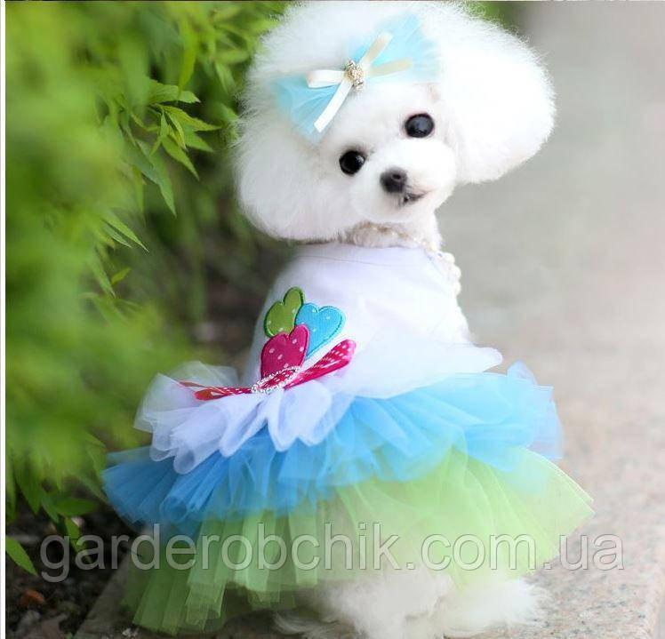 """Платье для собаки, кошки """"Три сердца"""". Одежда для собак, кошек m"""