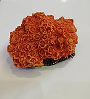 8809 -4 Trixie Декоративний корал для акваріума 1шт