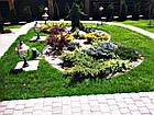 """Садовый бордюр """"Екобордюр"""" тип2  економ (10м) зелёный, фото 3"""