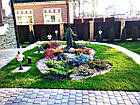 """Садовый бордюр """"Екобордюр"""" тип2  економ (10м) зелёный, фото 4"""