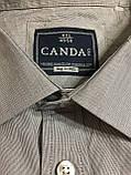 Рубашка хлопковая CANDA.(4XL\ 50), фото 3