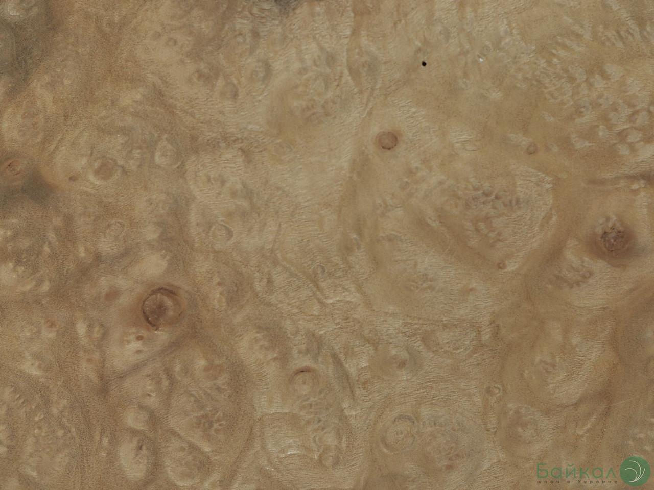 Шпон корінь Мирт 0,6 мм - Logs