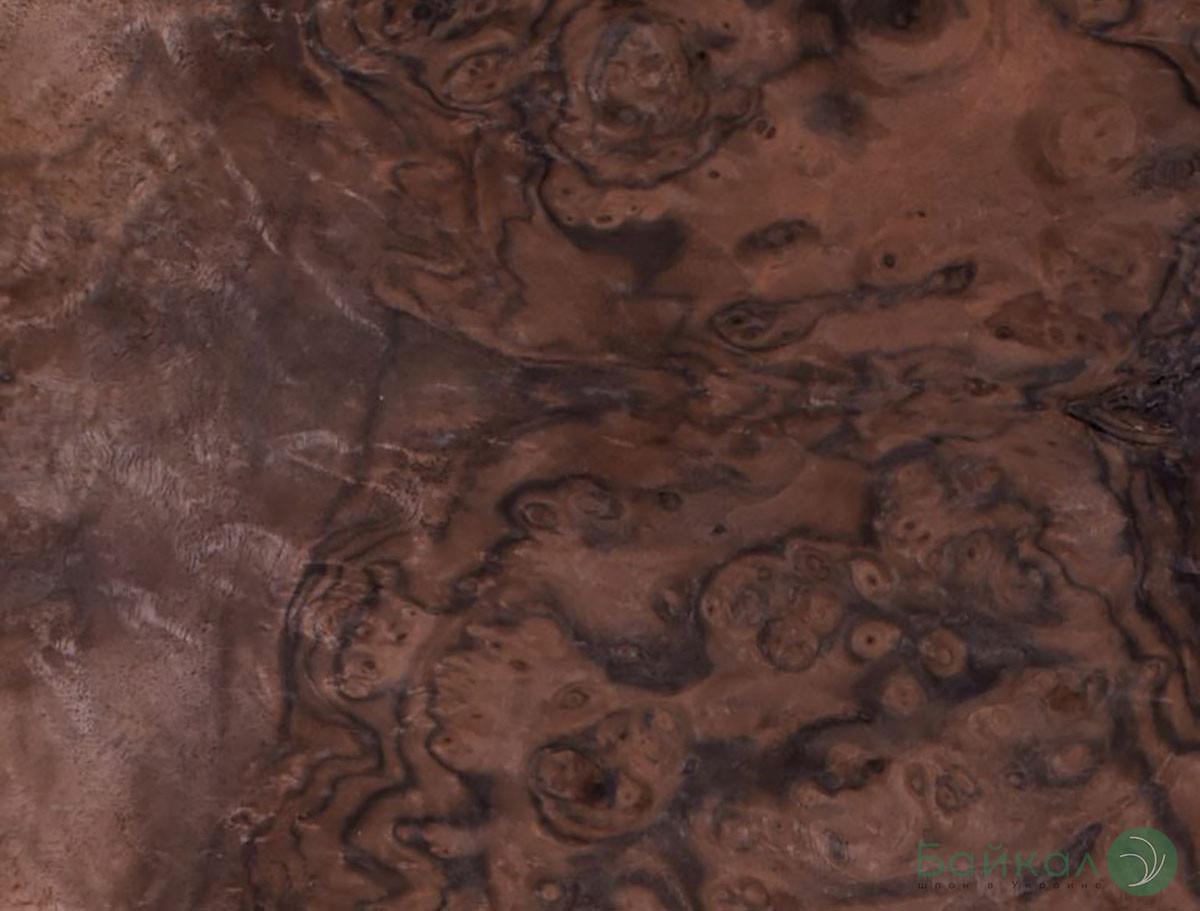 Шпон корень Орех Американский 0,6 мм  - Singl
