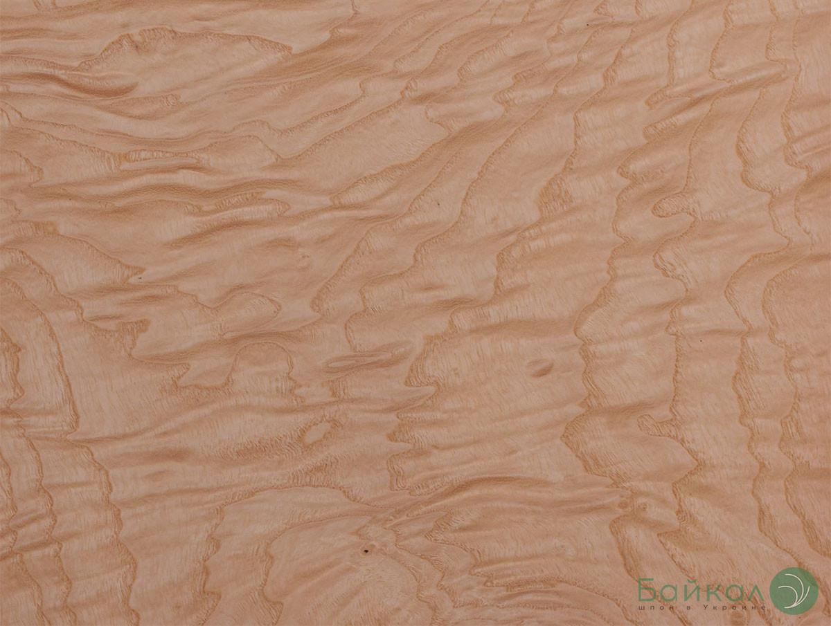 Шпон корень Ясень Белый 0,6 мм - Singl